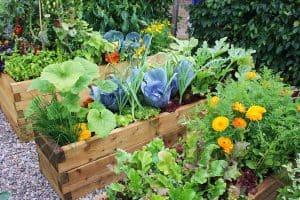 Bujen vrt si lahko ustvarite preprosto in hitro z izbiro vrtnin, ki si pomagajo pri rasti.